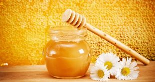 صور فوائد غذاء ملكات النحل , الفوائد الغذائية لعسل النحل