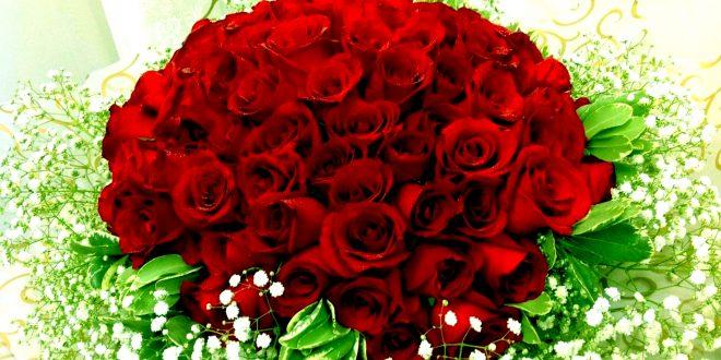 بالصور صور ورود حلوه , اجمل باقات الورود الحمراء 5789 10 660x330