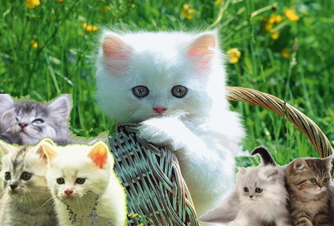 صورة القط والتصافير , تربيه القطط