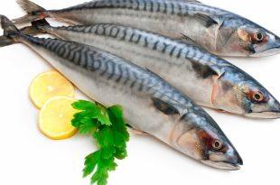صورة معلومات عن الاسماك , القيمه الغذائيه للاسماك