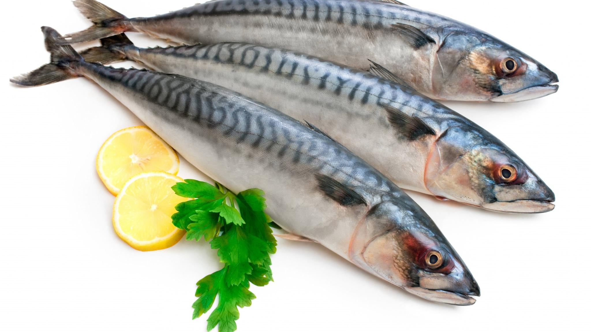 صور معلومات عن الاسماك , القيمه الغذائيه للاسماك