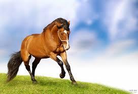 بالصور اجمل خيول في العالم , اجمل سباق للخيول 6194 2