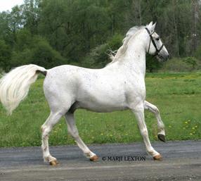 بالصور اجمل خيول في العالم , اجمل سباق للخيول 6194 5