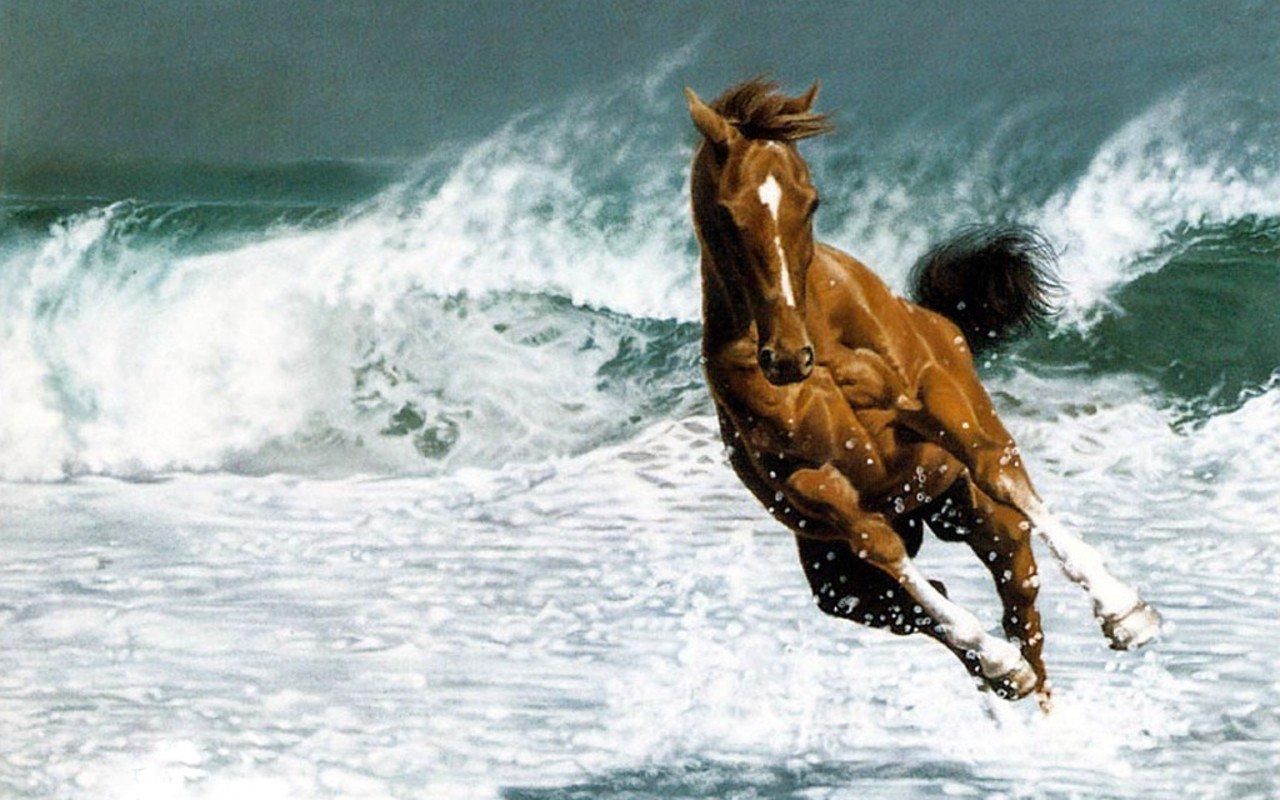 بالصور اجمل خيول في العالم , اجمل سباق للخيول 6194 7