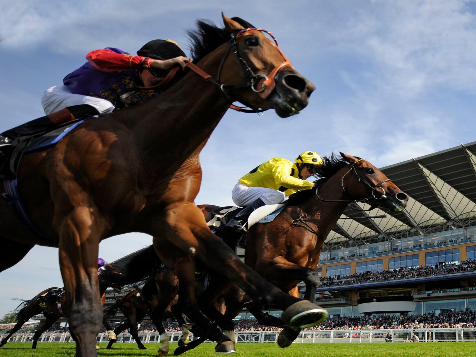 صور اجمل خيول في العالم , اجمل سباق للخيول