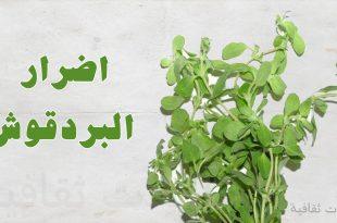 صور اضرار البردقوش , مجتنبات نبات البردقوش