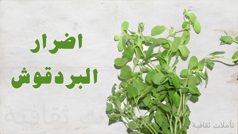 صورة اضرار البردقوش , مجتنبات نبات البردقوش