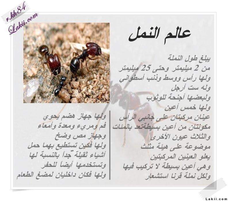 صورة معلومات عن النمل , حياة النمل ومعيشته