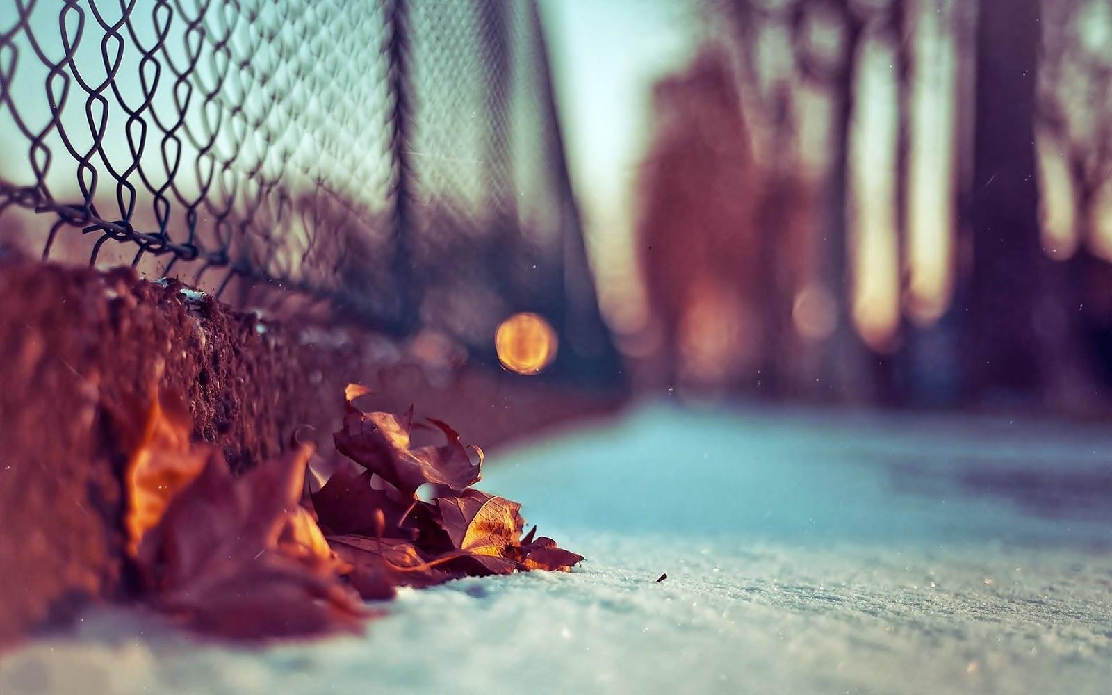 صورة تصاميم صور , اشكال جميلة لتصماميم الصور
