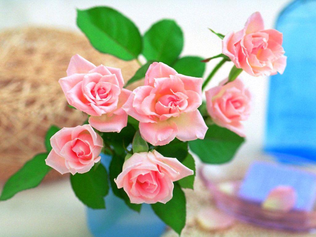 صورة صور عن الورد , صور لاروع النباتات وارقها