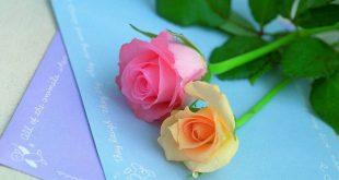 صورة زهور الحب , ورود رقيقة للحب