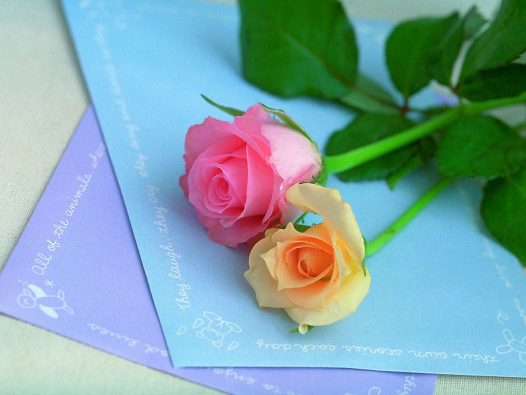 صور زهور الحب , ورود رقيقة للحب