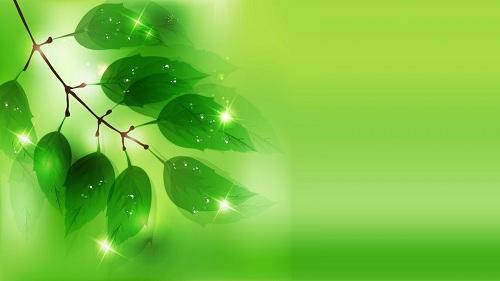 صورة خلفية خضراء , صور رائعة بالوان خضراء