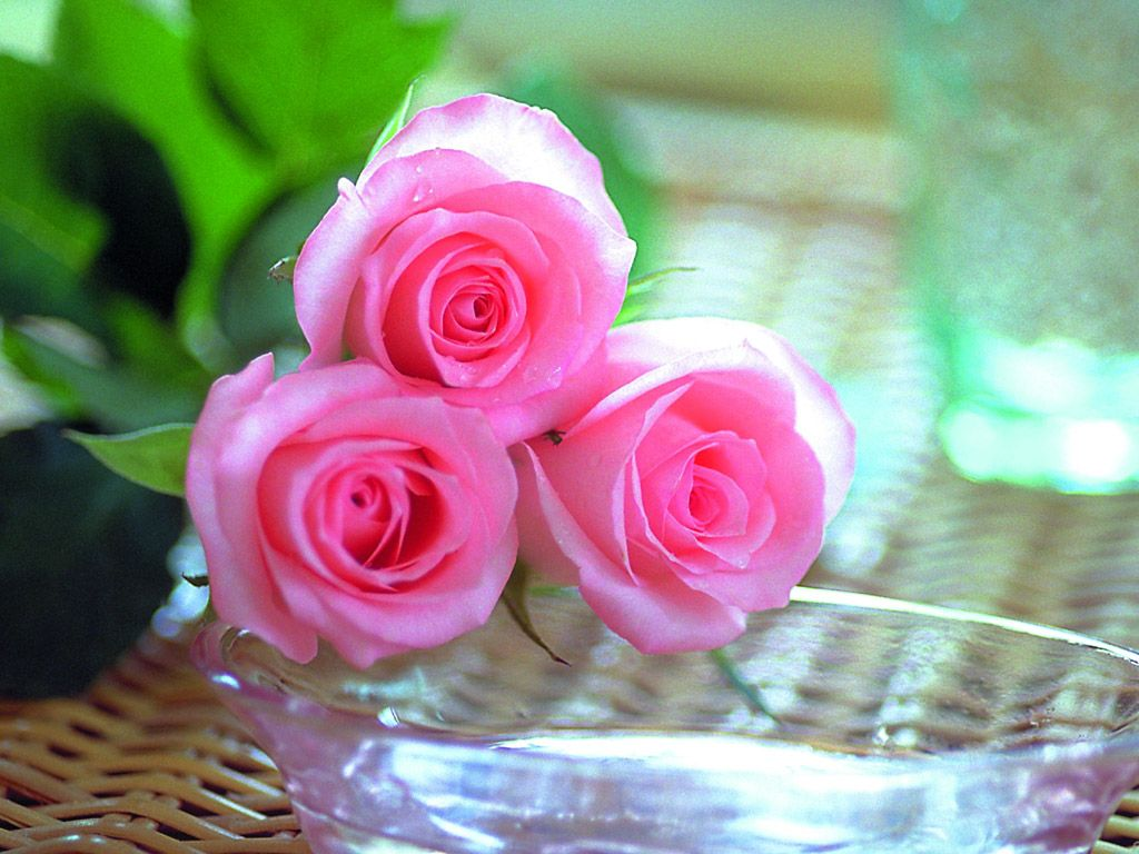 صور صور اجمل ورد , بالصور افضل الزهور