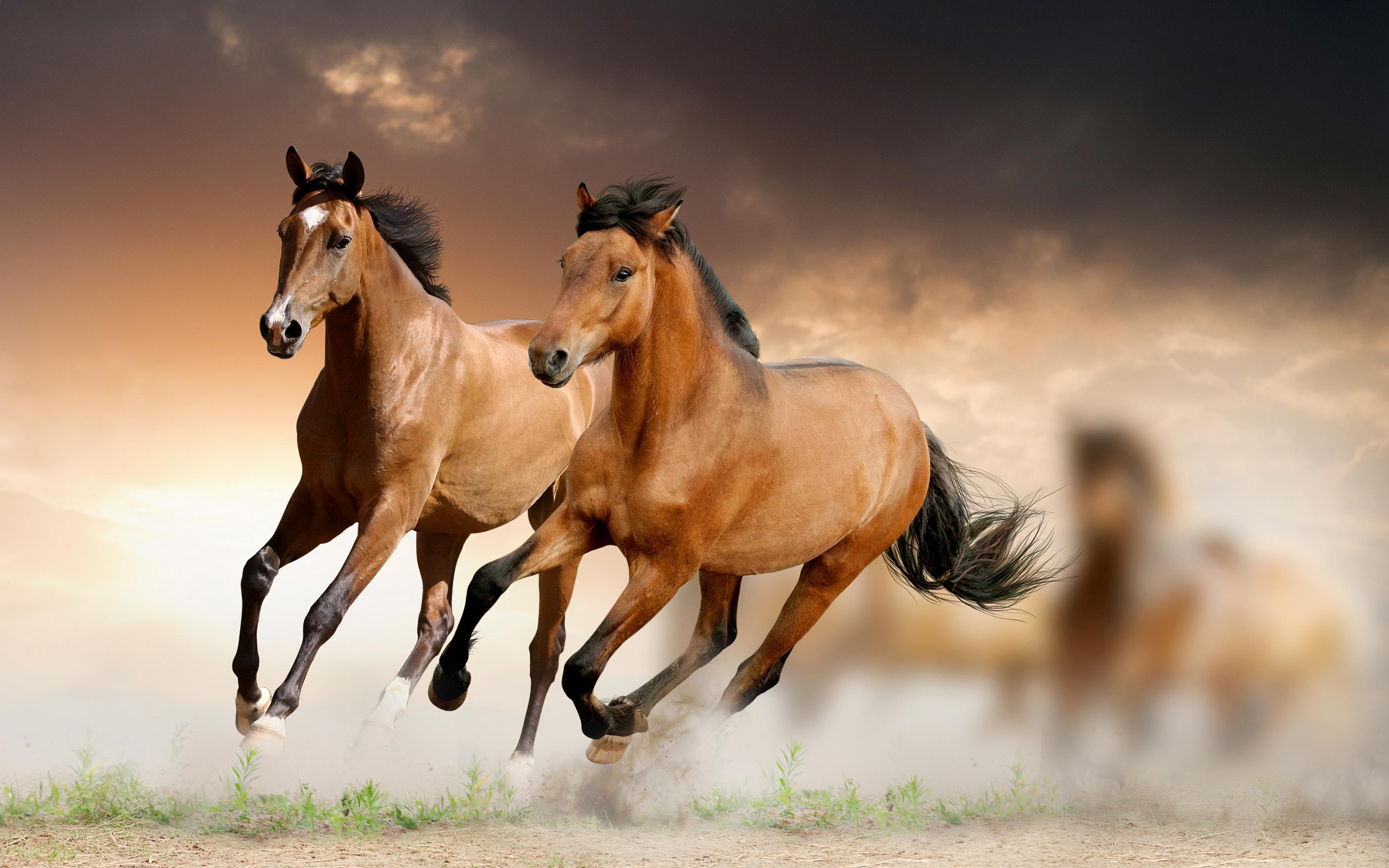 صورة صور حصان , خيول جذابة وجميلة