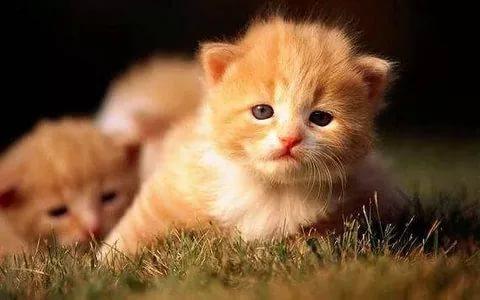 صورة صور قطط كيوت , احل صورة للقطط الصغيرة