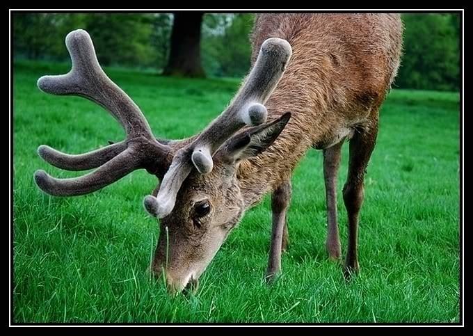 صور اغرب الحيوانات , حيوانات مدهشة وغير مالوفة