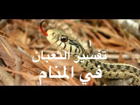 صورة رؤية الثعبان في المنام وقتله , تفسير رؤية الحية فى المنام والتخلص منها