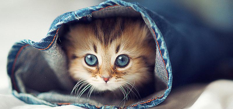 صورة خلفيات قطط , احلى صور جميلة للقطط