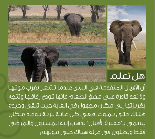 صور معلومات عن الحيوانات , معرفة كيف تعيش الحيوانات