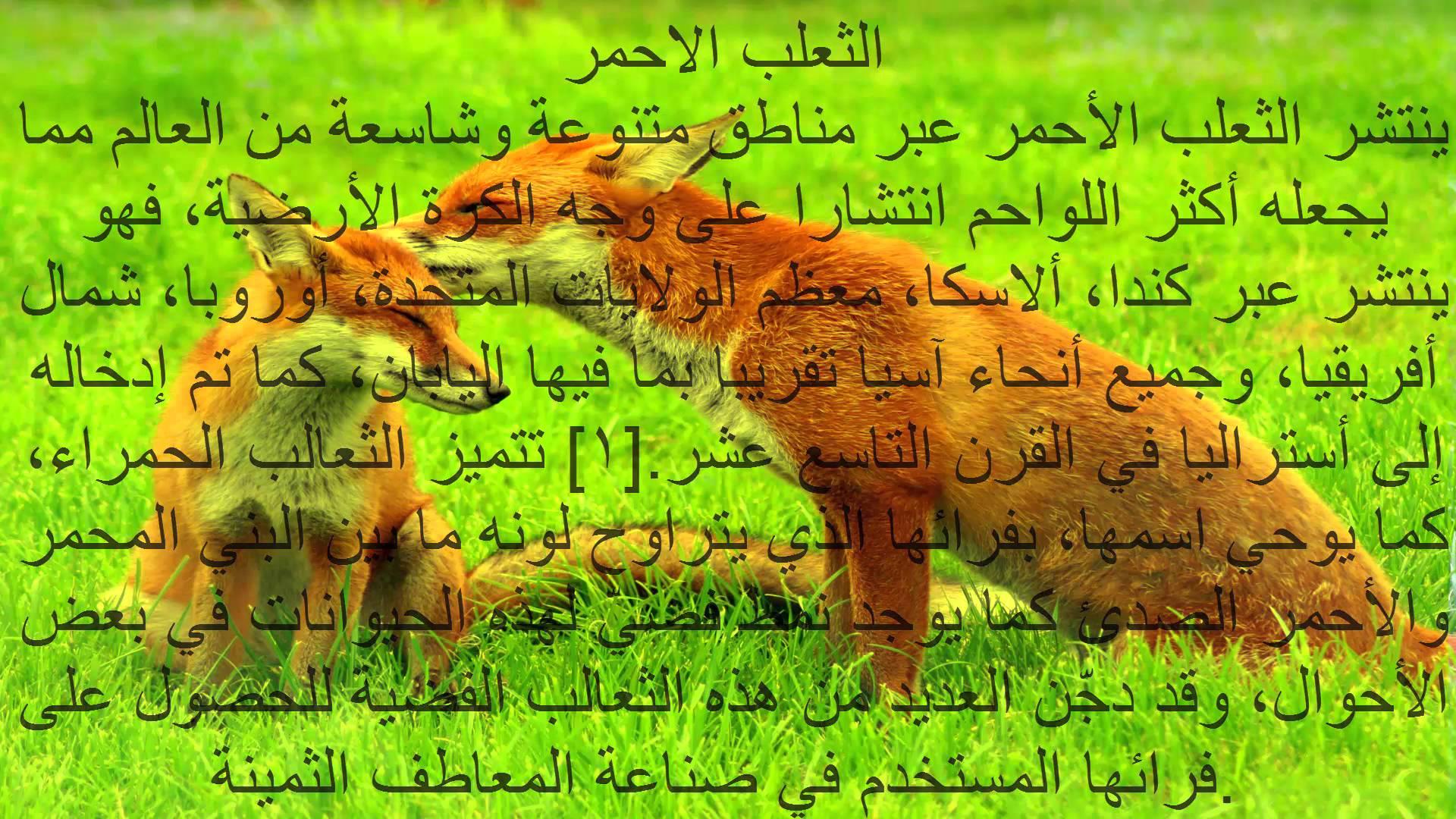 صورة معلومات عن الحيوانات , معرفة كيف تعيش الحيوانات
