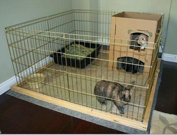 صورة تربية الارانب في المنزل , كيف تربى ارنب فى بيتك