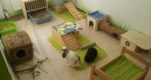 صور تربية الارانب في المنزل , كيف تربى ارنب فى بيتك