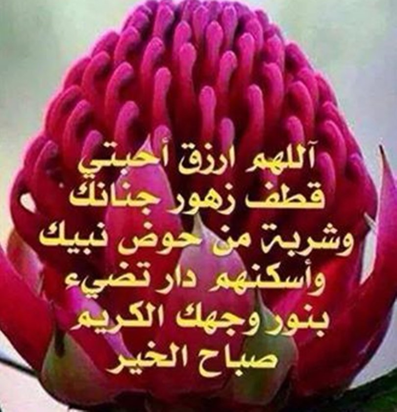 صورة خواطر عن الورد , اجمل الاشعار عن الورود