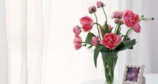 صورة خلفيات زهور , اجمل صور بها ورود