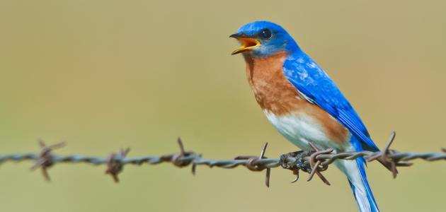 صورة اجمل طيور العالم , اشكال وانواع من الطيور الجميلة