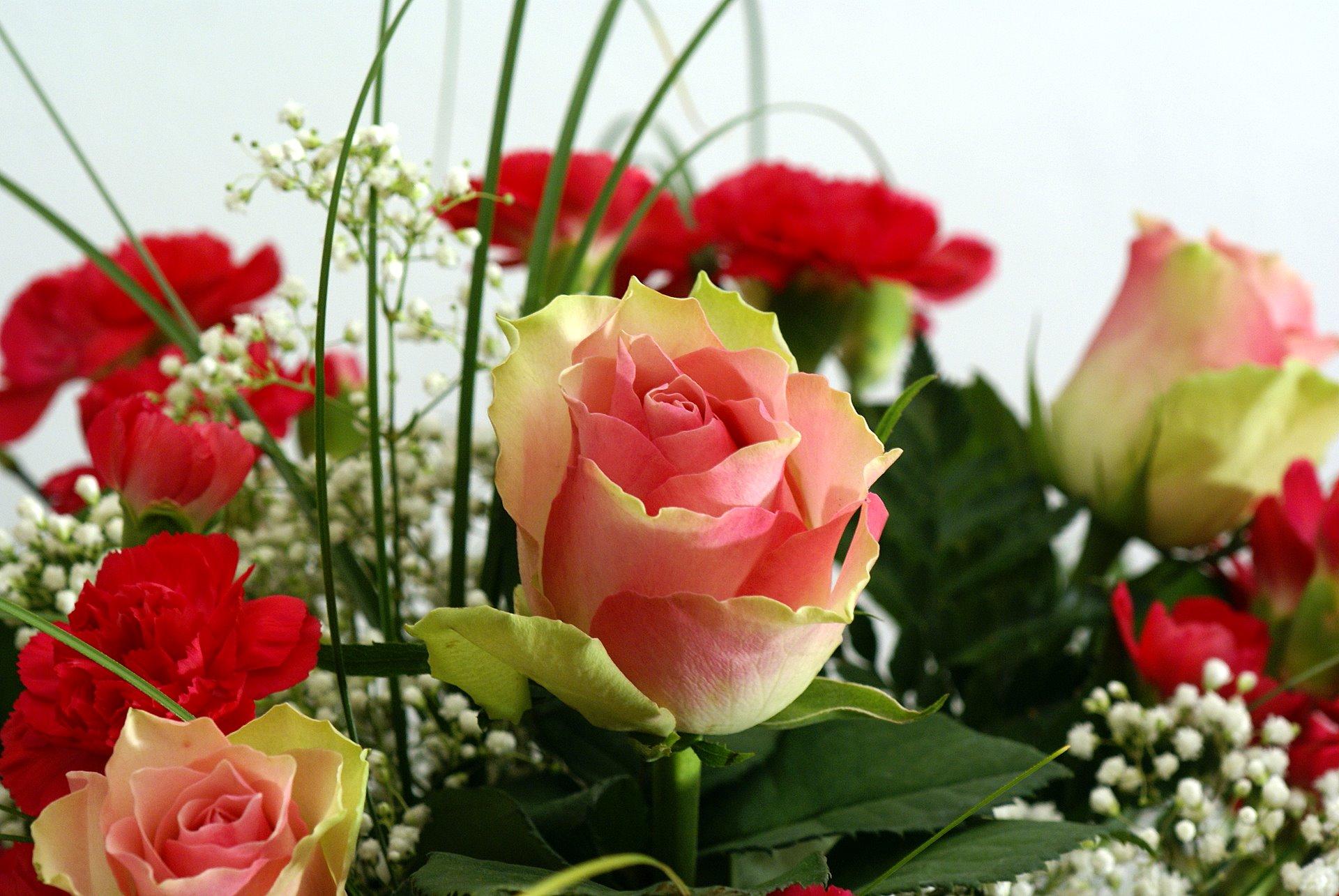 صوره صور اجمل الورود , ورود برونق خاص