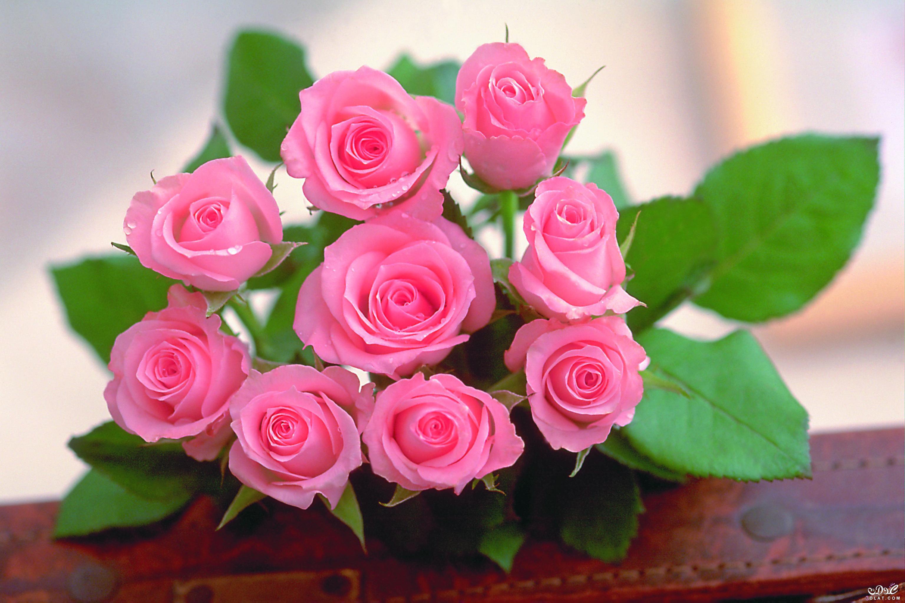 بالصور صور اجمل الورود , ورود برونق خاص 1020 2