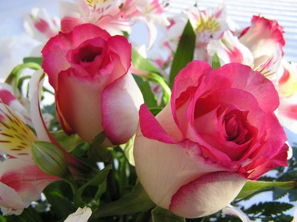 بالصور صور اجمل الورود , ورود برونق خاص 1020 3