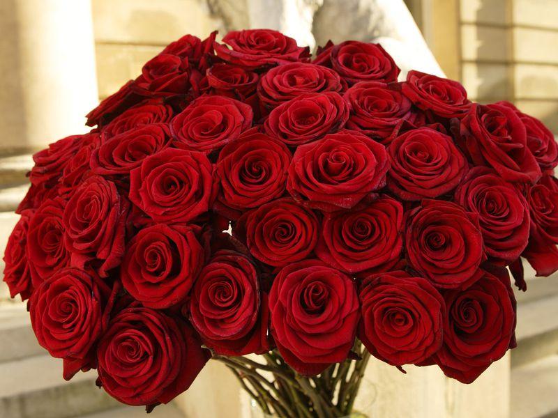 بالصور صور اجمل الورود , ورود برونق خاص 1020 4