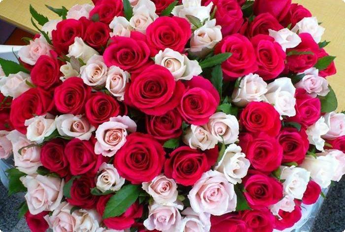 بالصور صور اجمل الورود , ورود برونق خاص 1020 5