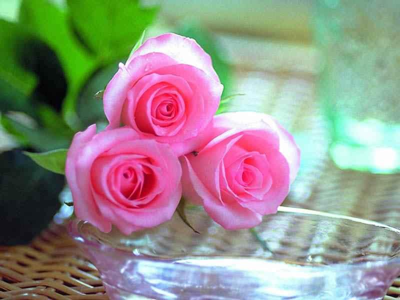 بالصور صور اجمل الورود , ورود برونق خاص 1020 6
