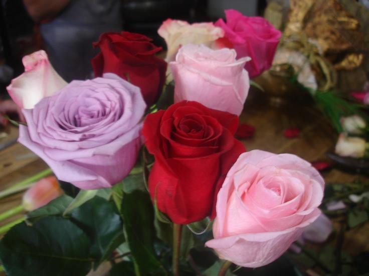 بالصور صور اجمل الورود , ورود برونق خاص 1020 8