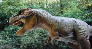 صورة معلومات عن الديناصورات , ما لا تعرفه عن الديناصور