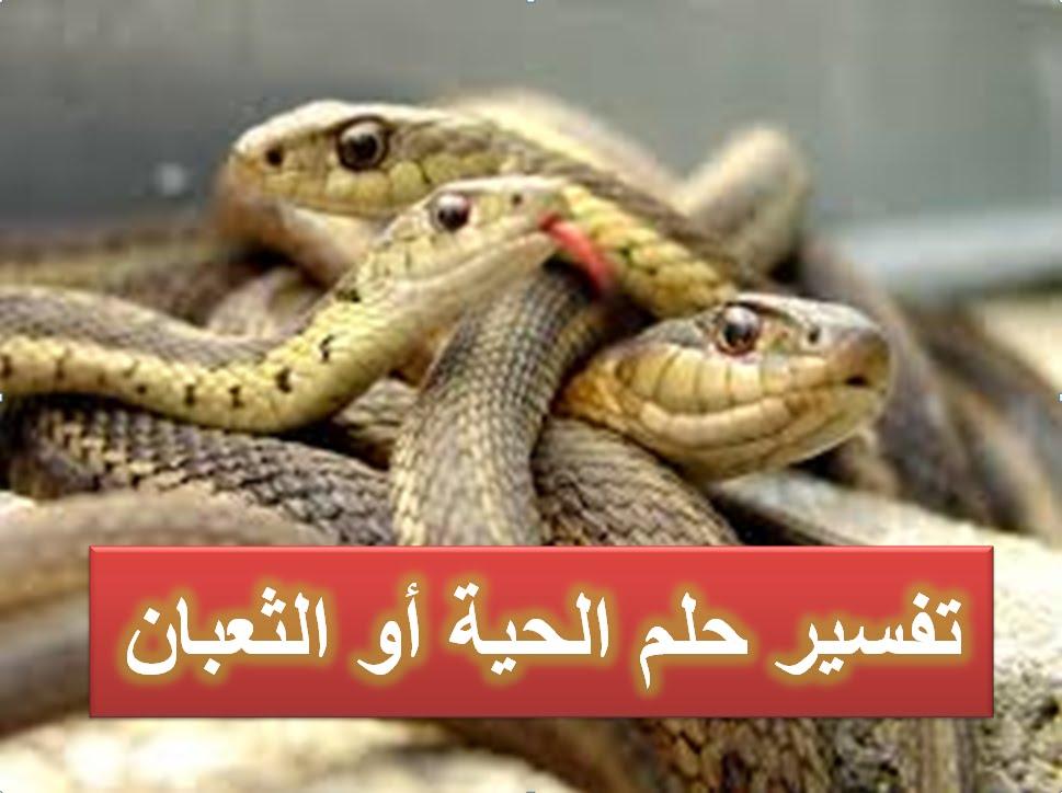 صورة تفسير الثعبان في المنام , تفسير ابن سيرين لرؤية الثعبان في المنام