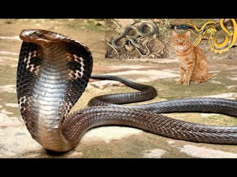 بالصور انواع الثعابين , جميع انواع الثعابين 1647