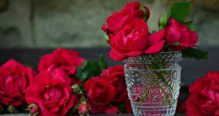 صورة صور الورد , صور ورد روعه 2457 3 310x165