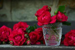 صور صور الورد , صور ورد روعه