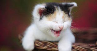 بالصور صور قطط مضحكة , صور كوميديا جدا لقطط 3114 11 310x165