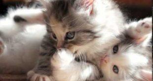 صورة صور قطط صغيرة , صور قطط صغيرة كيوتة جدا