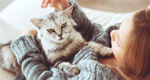 صور كيفية تربية القطط , طريقة لتربى القطط