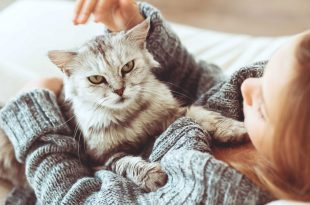 صورة كيفية تربية القطط , طريقة لتربى القطط