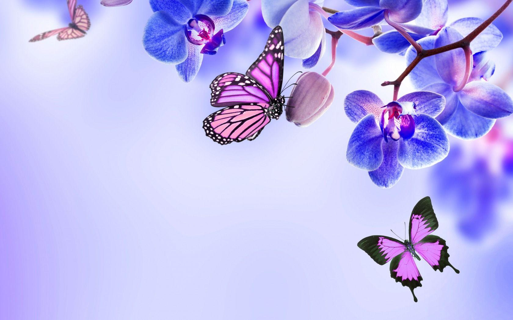 بالصور خلفيات شاشه جميله , خلفيات رائعة للفرشات 3678 2