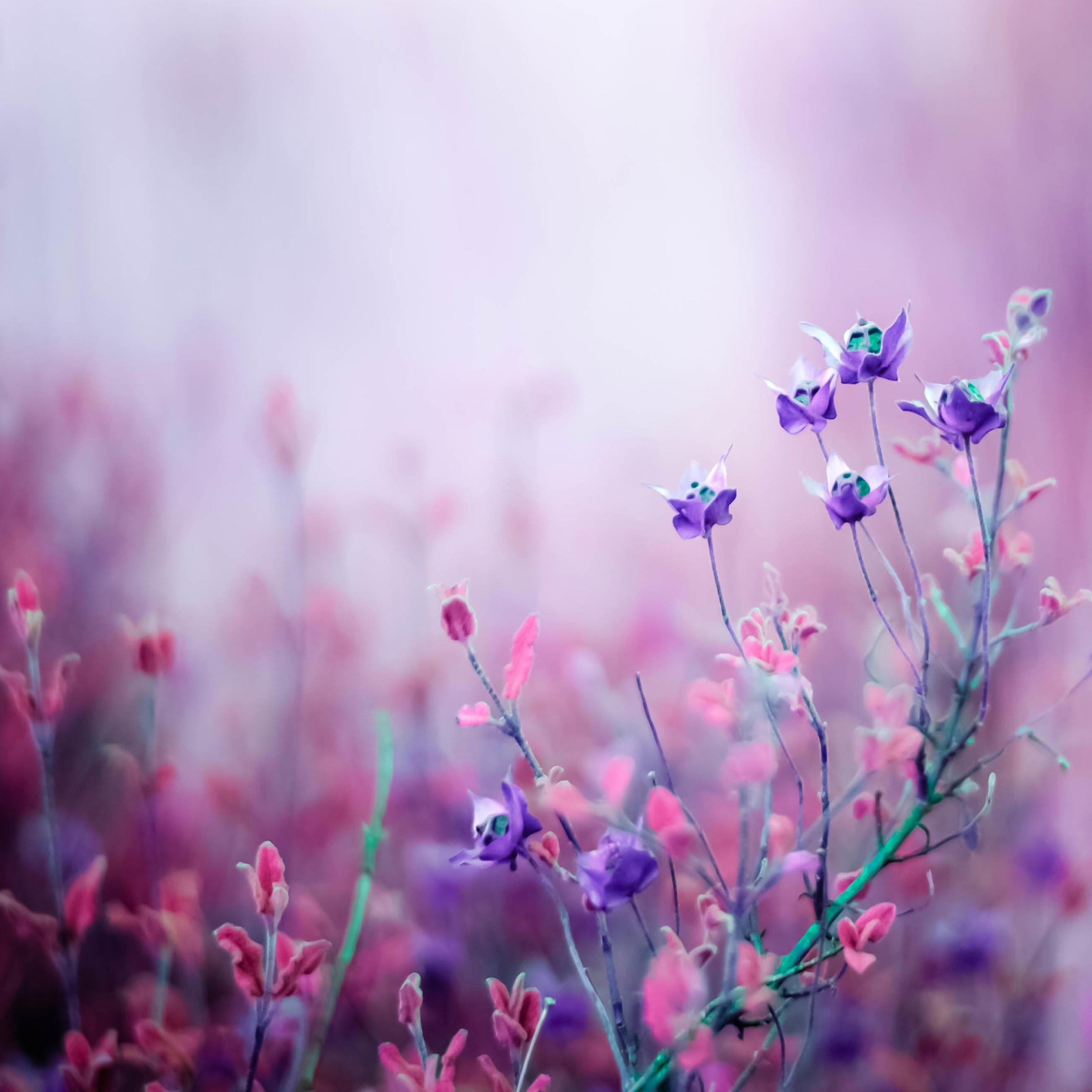 صوره صور خلفيات ورد , شاهد الرقة الشاعرية فى خلفيات الورد