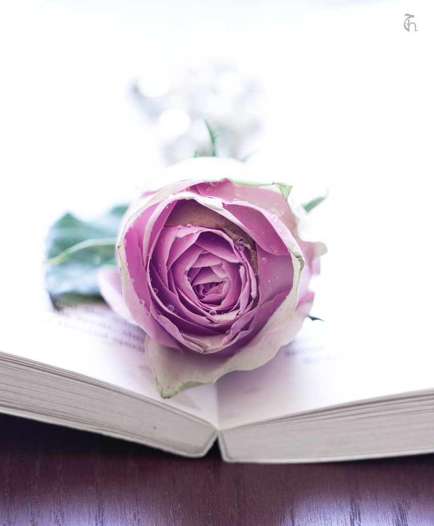 بالصور صور خلفيات ورد , شاهد الرقة الشاعرية فى خلفيات الورد 3804 9