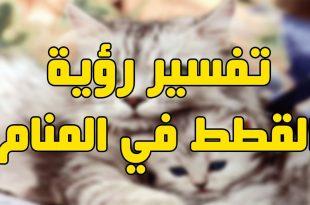 صورة رؤية القطط بالمنام , تفسير رؤية قطة بالحلم